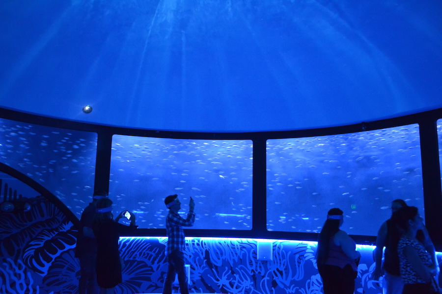 Go Under The Sea At Orlando Sea Life Aquarium
