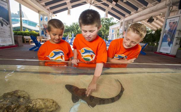 Aquarium Busch Gardens Entertainment Family News Orlando SeaWorld