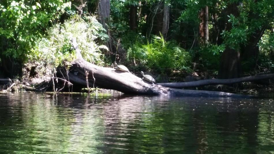 Paddling Center | Shingle Creek - Share Orlando 03