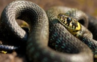 Repticon: Reptiles, Exotic Pet & SSSSSSnakes too!