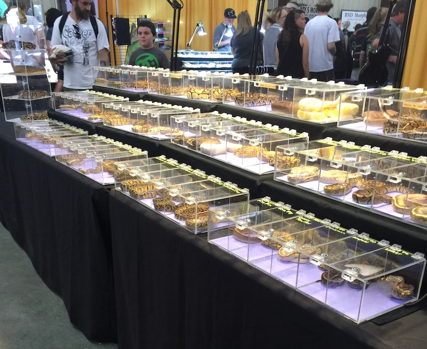 Repticon Exotic Pet Snakes 2015 ShareOrlando 06