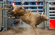 Get Ready for the 136th Silver Spurs Rodeo