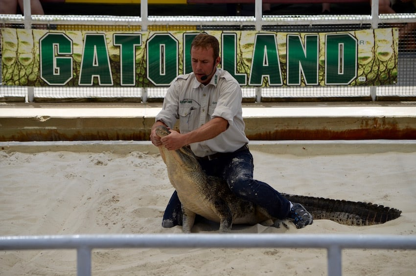 Gatorland Top 5 To Do | Orlando ShareOrlando 31