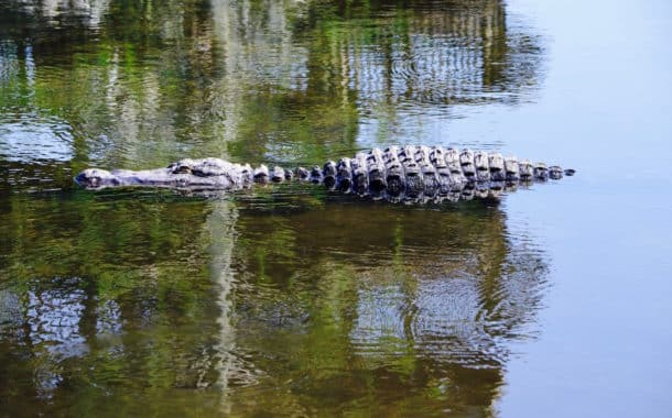Top 5 New (and old) Things To Do at Gatorland