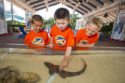 Summer Camp at SeaWorld is Fun and Exciting!