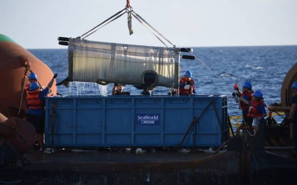 SeaWorld Successfully Returns Whale Back To Sea