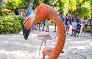 Discovery Cove® Announce Flamboyance of Flamingos